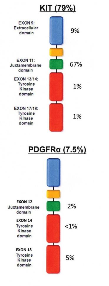 La importancia de conocer la mutación de tu GIST para optimizar y personalizar el tratamiento